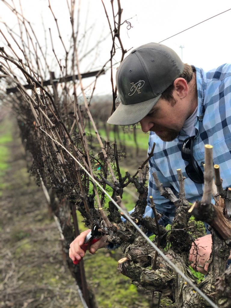 Grower Charlie Hamilton Pruning
